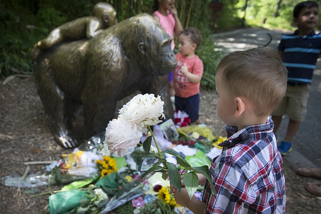 Police investigate parents of boy rescued from gorilla