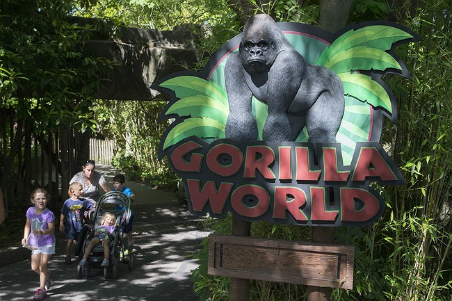 Gorilla exhibit barrier didn't meet US standards when Harambe was shot