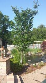 Koi Ponds on Long Island