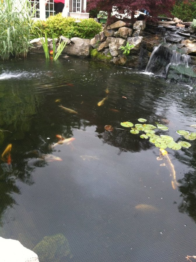 koi ponds on long island photo gallery