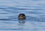Seal Walks, Hikes & Cruises on Long Island