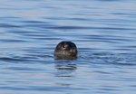 Seal Walks, Hikes & Cruises on Long Island