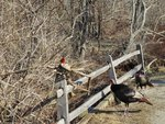 Morton Wildlife Bird Sanctuary