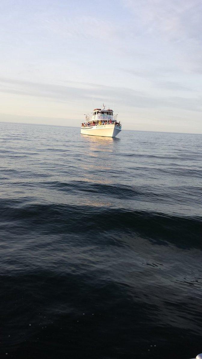 Fishing photo gallery for Long island fishing charters