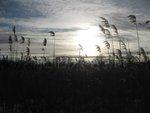 Meadow Croft