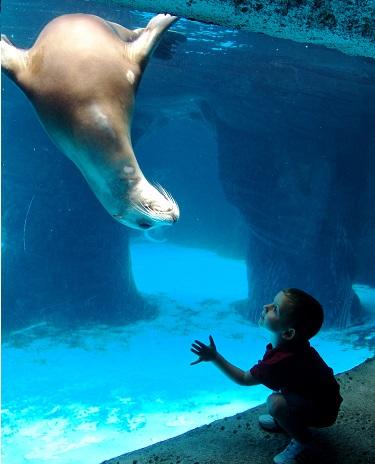 The Long Island Aquarium Amp Exhibition Center Offers Lots