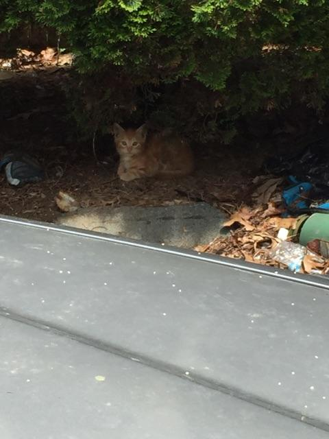 Long Island Animals Shelters