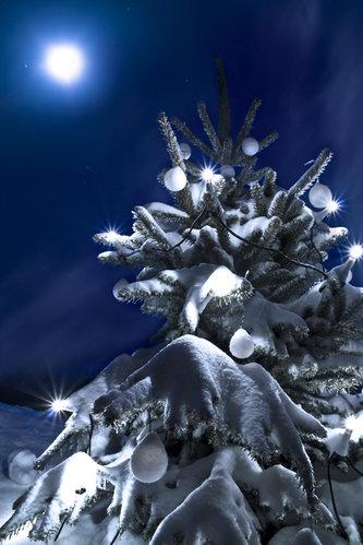 Cut Your Own Christmas Tree Long Island.Wednesday S Top 10 Christmas Tree Farms Longisland Com