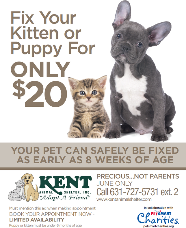 Kent Animal Shelter Offers Low Cost Spayneuter For Kittens And