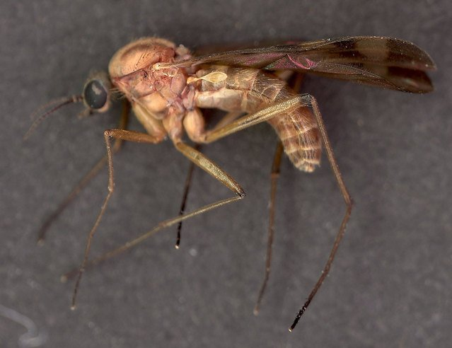 Butte County resident dies of West Nile-related causes