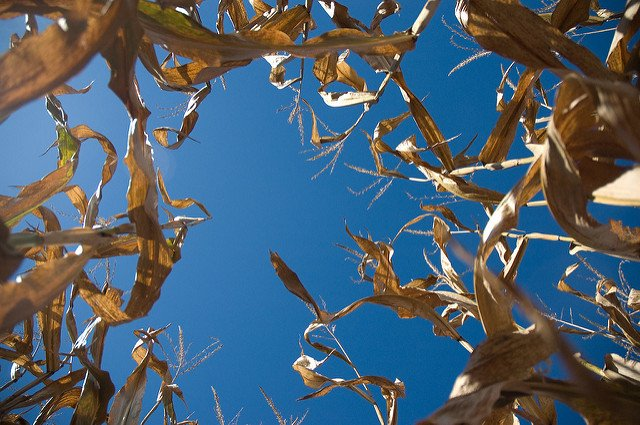 Where To Go To Get Lost In A Corn Maze This Fall On Long