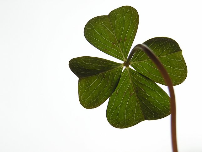 Keep The Luck O The Irish With Your Year Round How To Preserve A