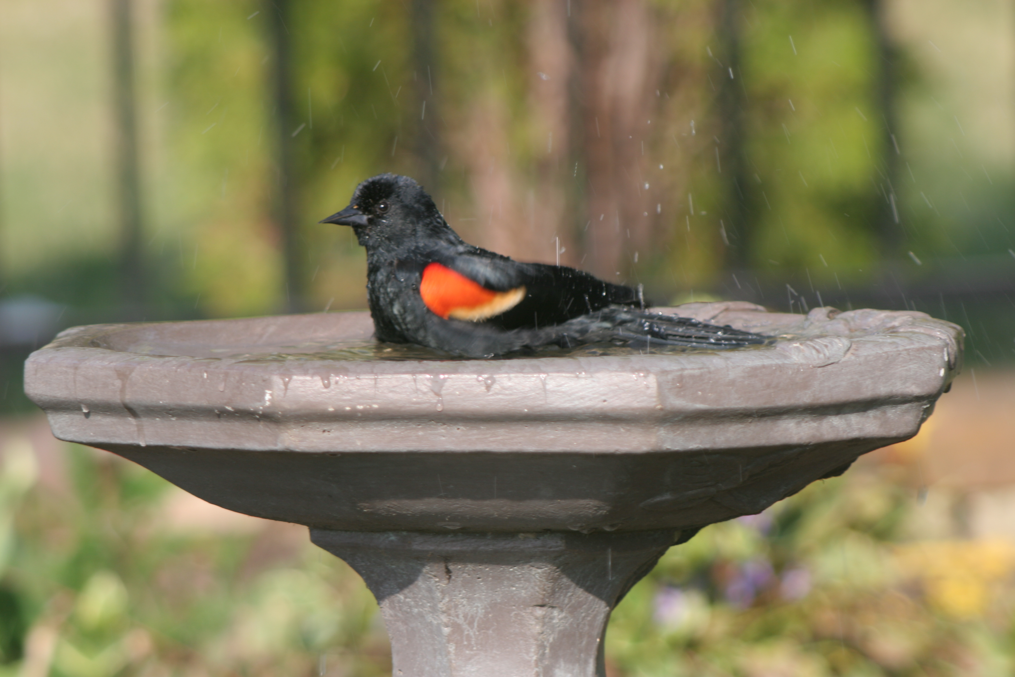 how to clean bird baths safely