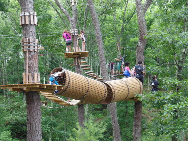 The Adventure Park At Long Island To Celebrate Arbor Day