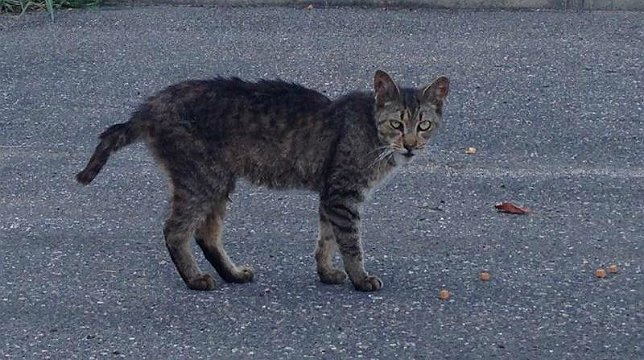 How To Get Rid Of Stray Cats In Your Backyard a look at long island's growing feral cat epidemic; what can be done