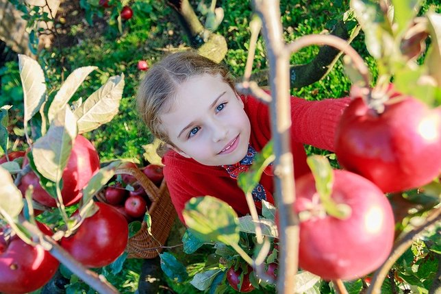 Where To Go Apple Picking On Long Island Longisland Com