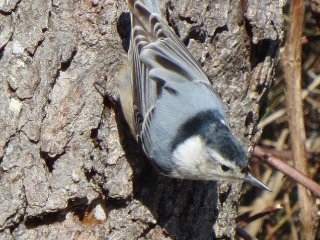 The 19th Annual Great Backyard Bird Count: Birding Events U0026 Where To Go Bird  Watching On Long Island