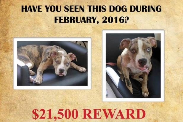 Suffolk SPCA Offers $21,500 Reward for Information on Hanged