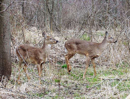 Remaining deer management permits available for hunters for Nysdec fishing license