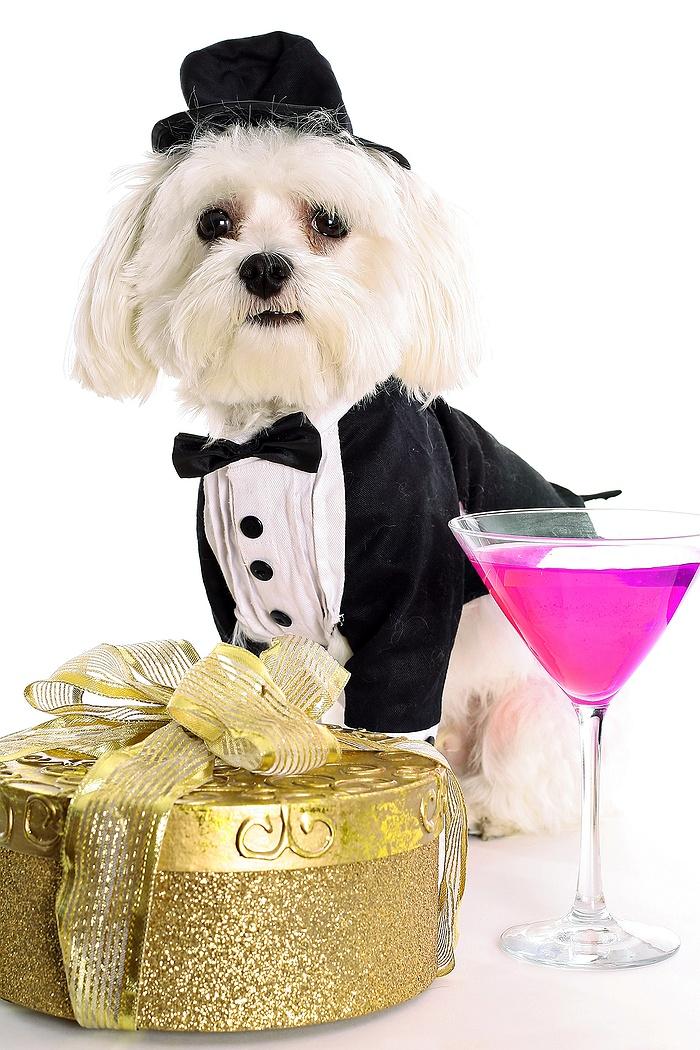 It's Doggie-Tine's Day! Doggie Wedding on Long Island
