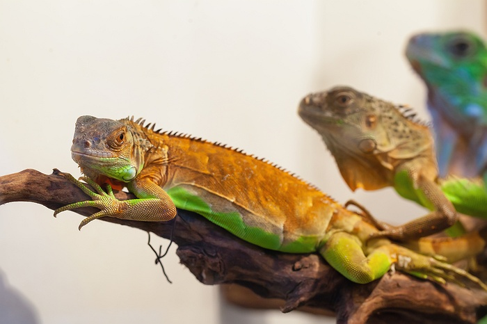 LI's Largest Reptile Expo is Coming October 20