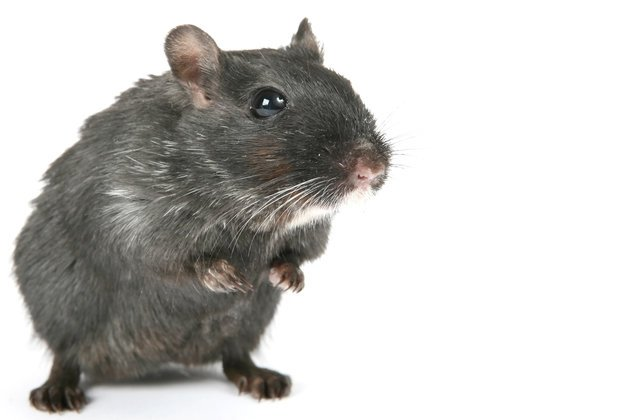 D Con Mouse Poison >> Dangerous Mouse and Rat Poison Pellets Get Phased Out After EPA Puts Pressure on Nation's ...