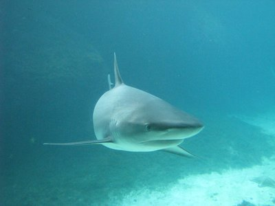 Fishermen encourage sustainability with catch and release for Montauk shark fishing