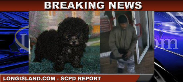 Suffolk Police on Lookout for Man Who Stole Puppy from