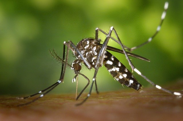 West Nile-infected mosquitoes could be in Grey-Bruce too