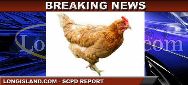 SPCA Seeking Individual Who Abandoned Hens to Die in ...