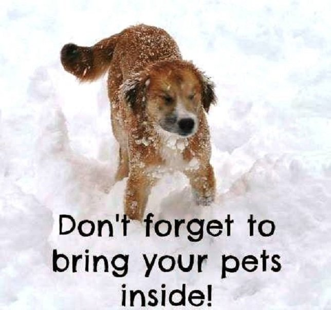 Scspca protect your pet during winter and cold weather - Keeping outdoor dog happy winter ...