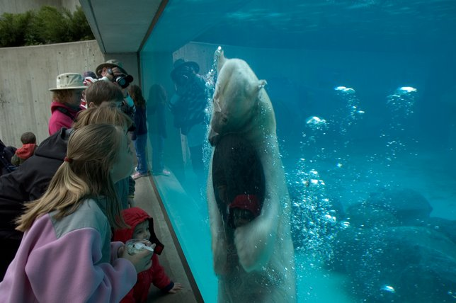 Go Wild This June National Zoo And Aquarium Month