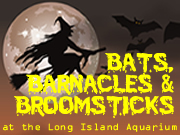 Bats, Barnacles, & Broomsticks at the LI Aquarium