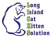 Long Island Cat Kitten Solution