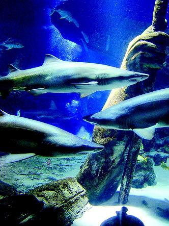 Long Island Aquarium And Exhibition Center In Long Island