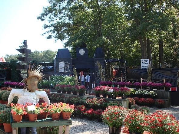 Woodside Nursery Garden Center In Long Island Patchogue Ny