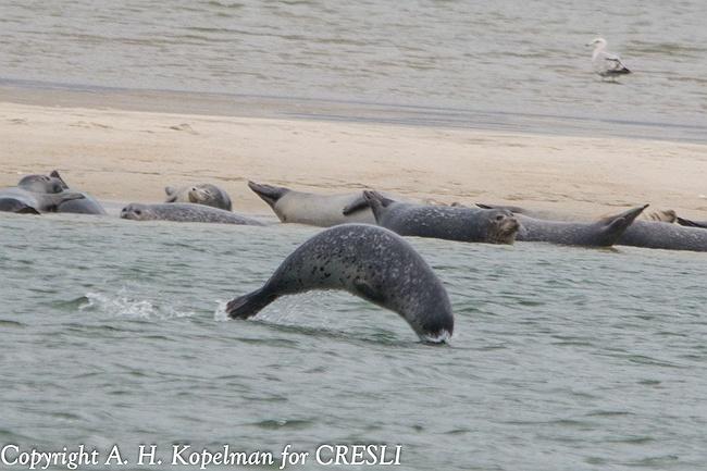 Seal Watching Long Island Ny