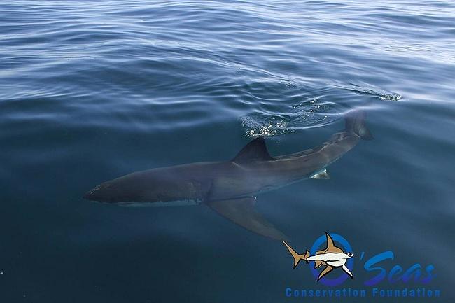 Swim With Sharks Long Island Ny