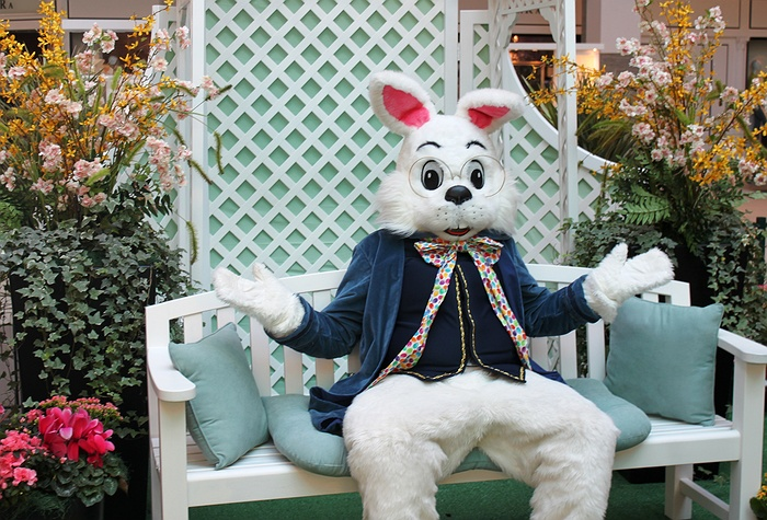 Pictures With Easter Bunny Long Island