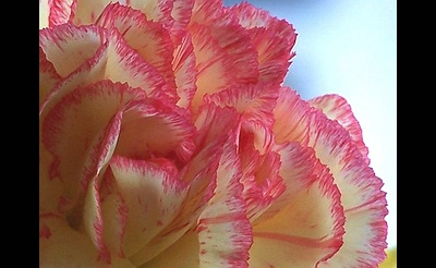 Sapphire Princess' Mother's Day Buffet