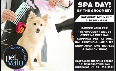 Spa Day At Petvalu! Fashion Show And Cat Adoptions!