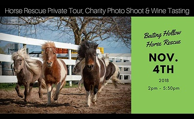 Baiting Hollow Horse Rescue Private Tour, Charity Photo Shoot,  Lunch & Wine Tasting