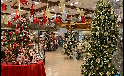 Experience the Magic of Christmas at Hicks Nurseries