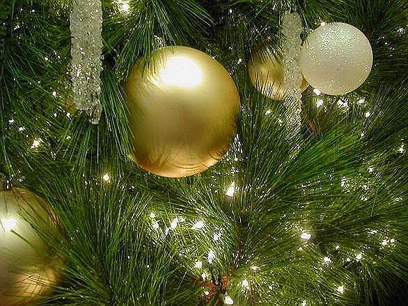 Long Island Christmas Tree Lighting 2020 Orient Beach State Park's 2020 Holiday Tree Lighting Ceremony
