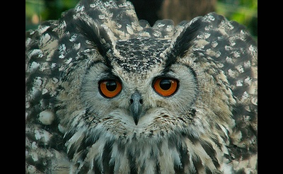 Live Raptors, Owls Included & Introduction to the Evelyn Alexander Wildlife Rescue Center