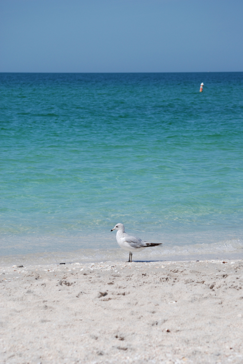 Meschutt Beach (Hampton Bays, NY): Top Tips Before You Go ...
