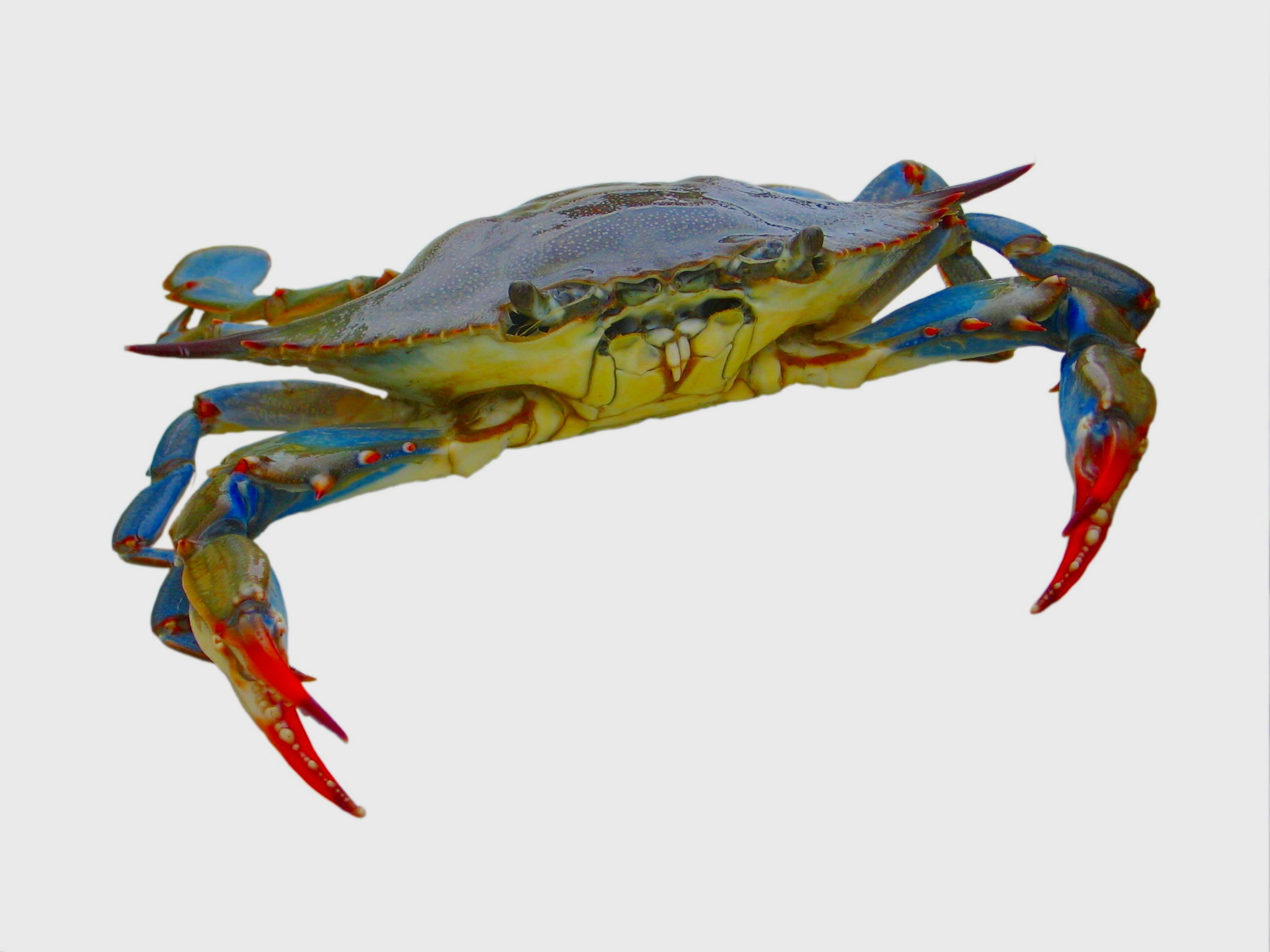 Crabbing places to go crab catching on long island for Nys fishing license cost