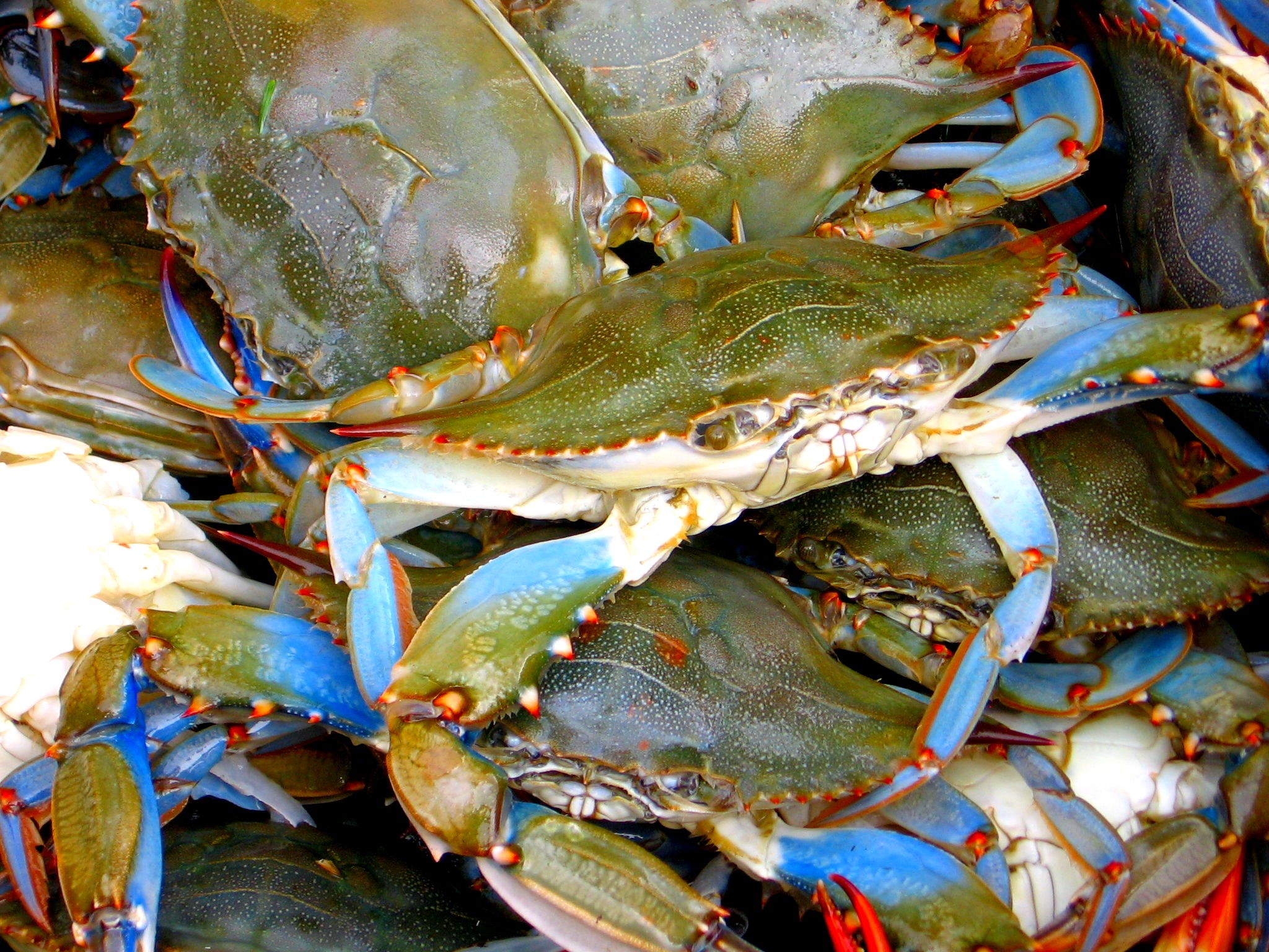 Crabbing Places In Long Island
